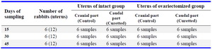 Table 1. Groups of the present study for induction of human Asherman's syndrome in rabbit model