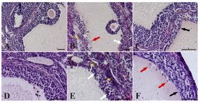 Figure 1. Effect of different hormonal treatment on the percentage of follicles presenting atretic/cystic signs.